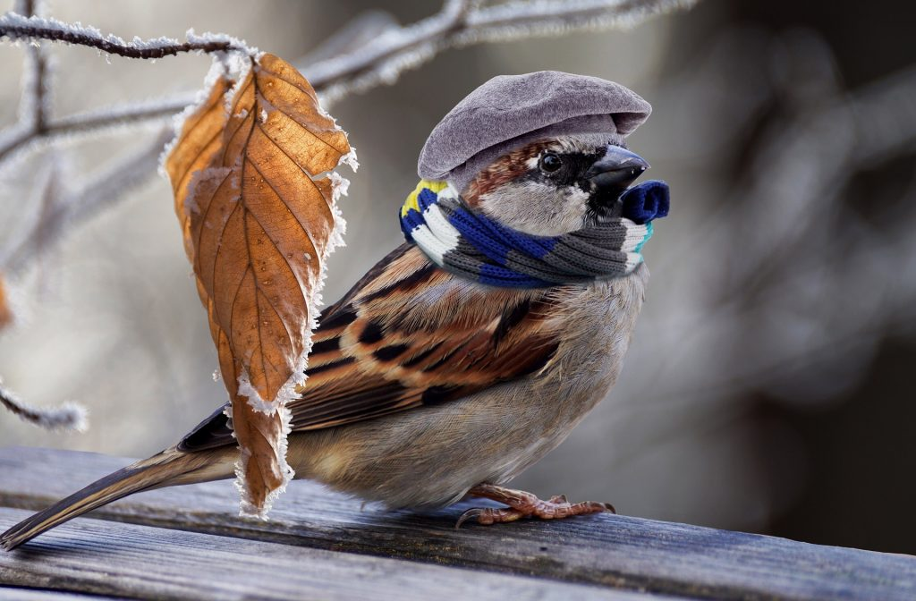 bird-with-hat-heading-out-to-network